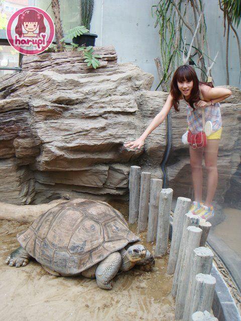 20090805_harupi_uenozoo_big_tortoise