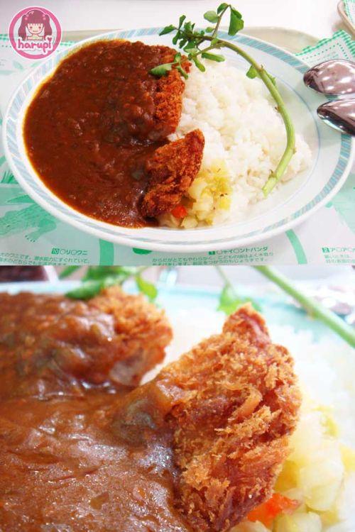 20090805_harupi_uenozoo_curry_katsudon