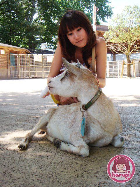 20090805_harupi_uenozoo_goat
