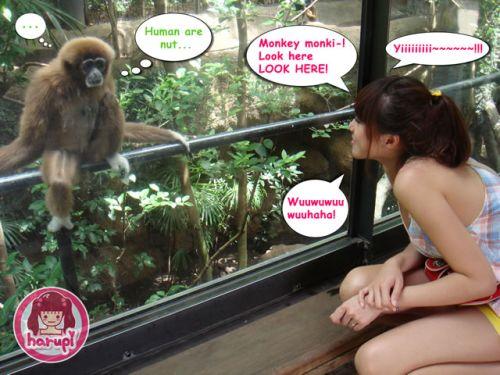 20090805_harupi_uenozoo_monkey_funky