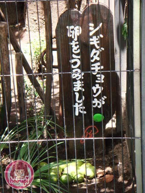 20090807_harupi_uenozoo_tinamou_eggs