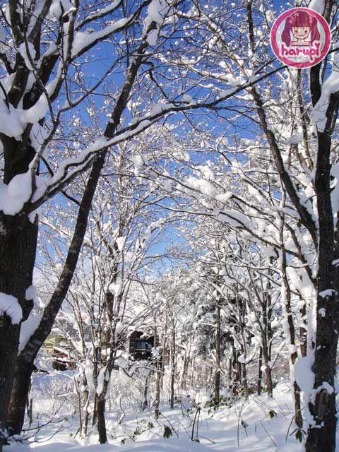 20091226_snow_toyland_11