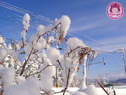 20091226_snow_toyland_9