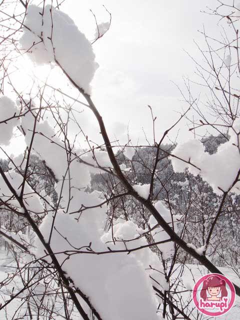 20100309-snow-tree.jpg