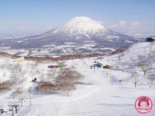 20100419-toyland-yotei.jpg