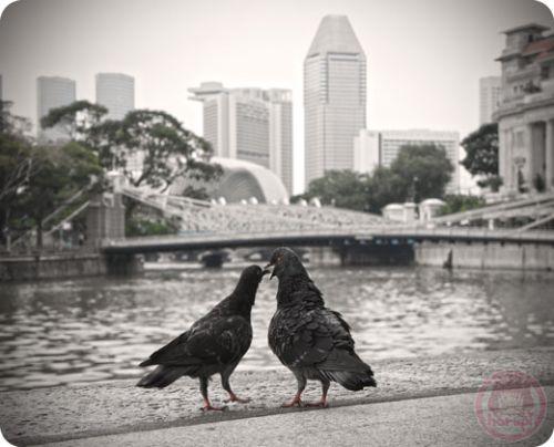 Pigeons at Boat Quay