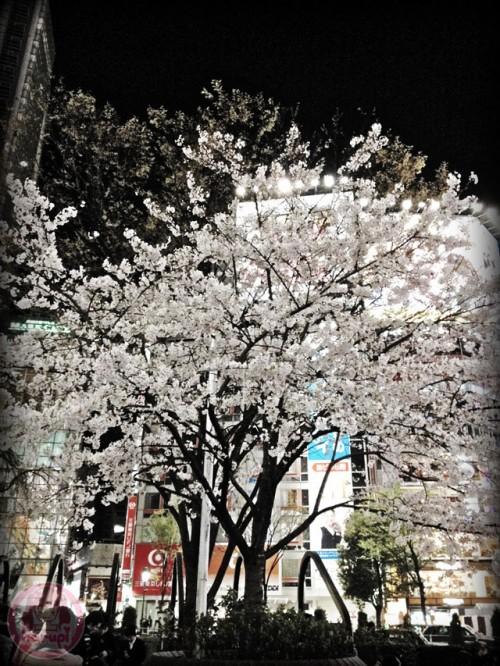 Night sakura in Shibuya