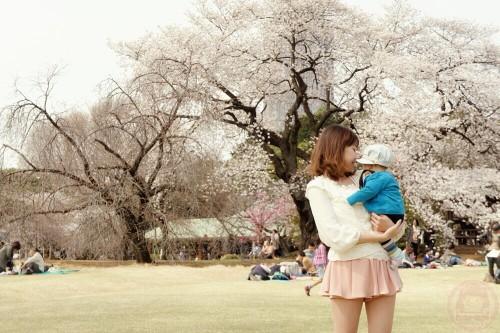 Sakura in Shinjuku-gyoen