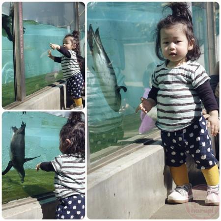 Penguin at Yumemigasaki Zoo Park 夢見ヶ崎動物公園のペンギン