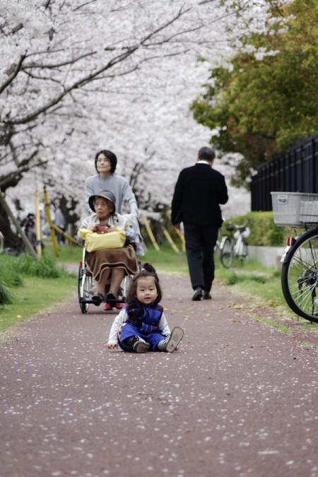 Peaceful - Sakura along Tamagawa riverside 多摩川の河原の桜並木