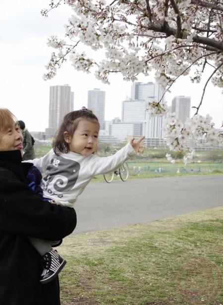 Little-big-boss with grandmama for hanami