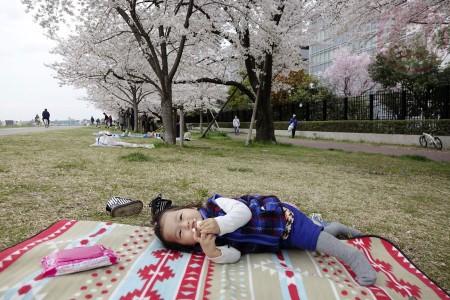 Lunch picnic at Tamagawa riverside 多摩川の河原でお花見