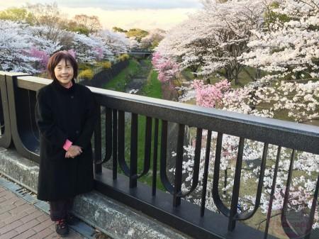 Mom with sakura at Showa Kinen Park