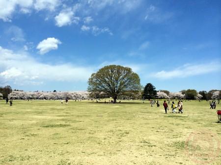 Showa Kinen Park square 昭和記念公園広場