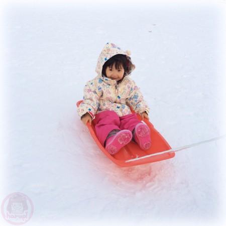 Yuki-chan on a sled