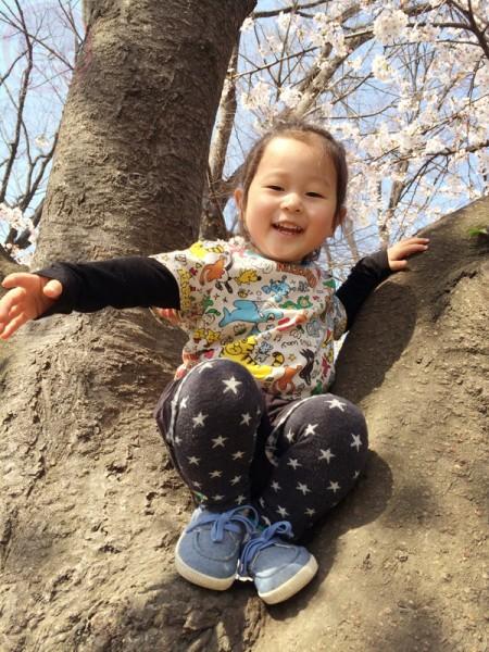 Little-big-boss up on a Sakura tree!