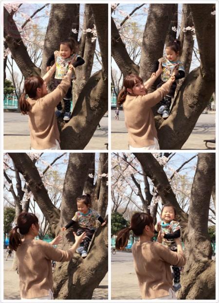 Mommy helping Little-big-boss up on a Sakura tree!